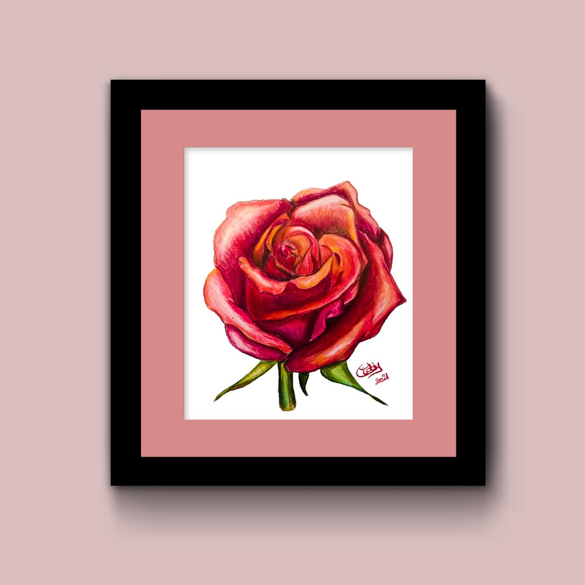 illustration dessin aux crayons fleur rose rouge dans cadre noir sur fond rose